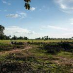 カンボジアの学校建設地6日目の様子