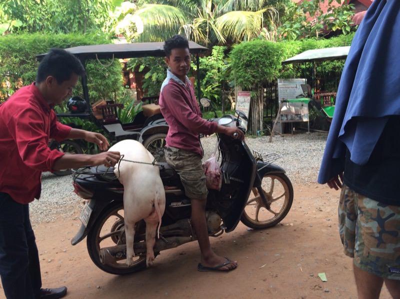 豚一頭買い