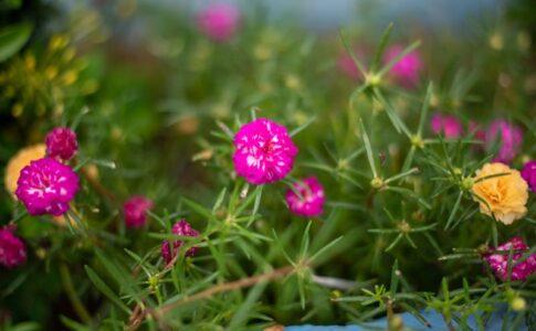 強く咲く花