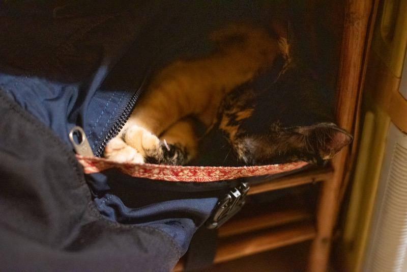 カバンに篭っている猫