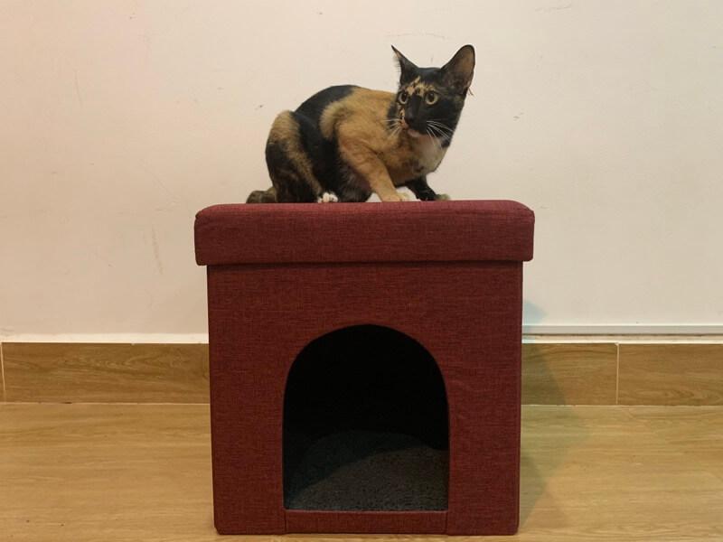 ペットハウスの上にいる猫