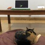 ワードプレスと猫
