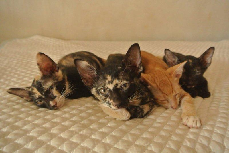 四匹で並ぶ猫