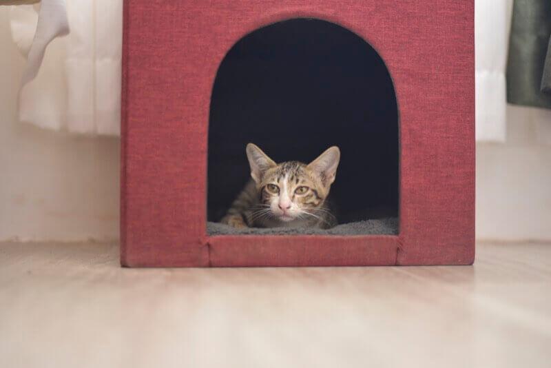 猫ハウスでくつろぐ大五郎
