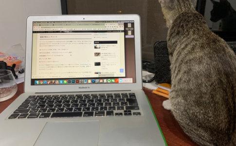 ブログの毎日更新をやめた経緯