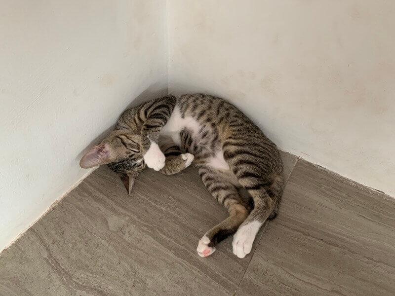 寝ている大五郎2