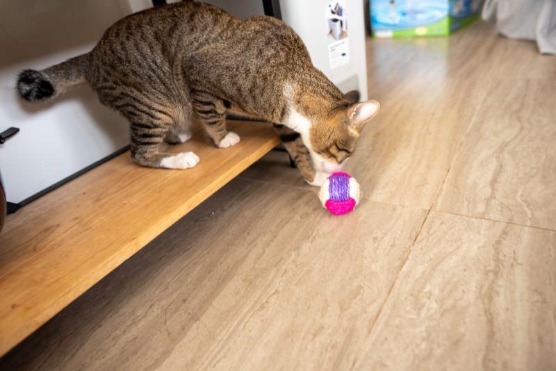 麻縄ボールで遊び始めた猫