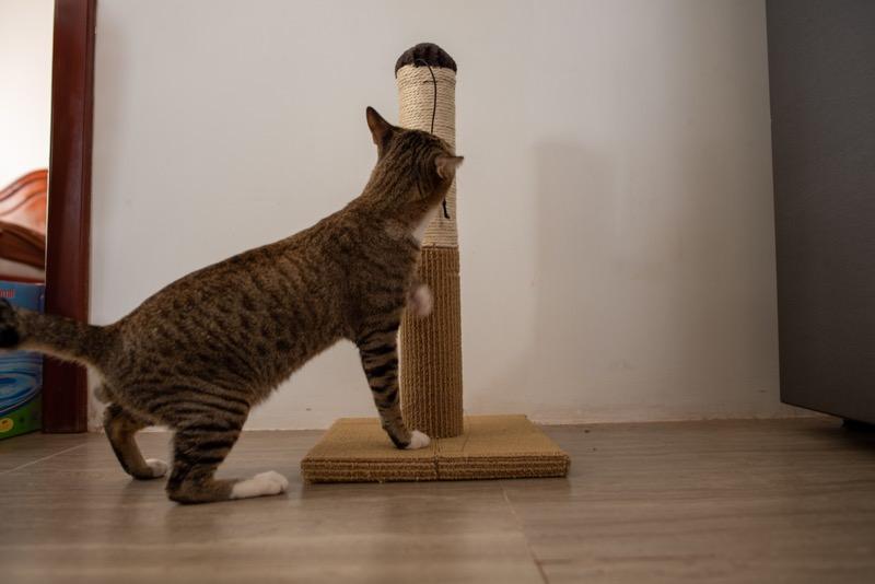 猫のおもちゃに反応する様子