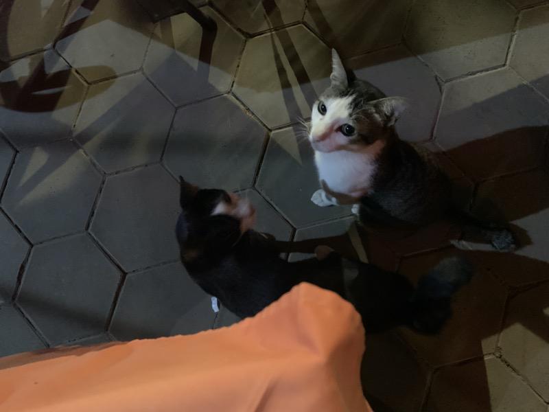 ジョージズラムリエの猫