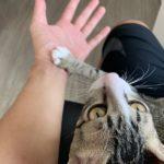 スマホを触らせてくれない猫