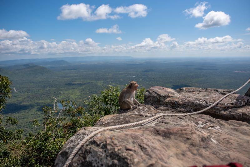 プレアビヒアの猿
