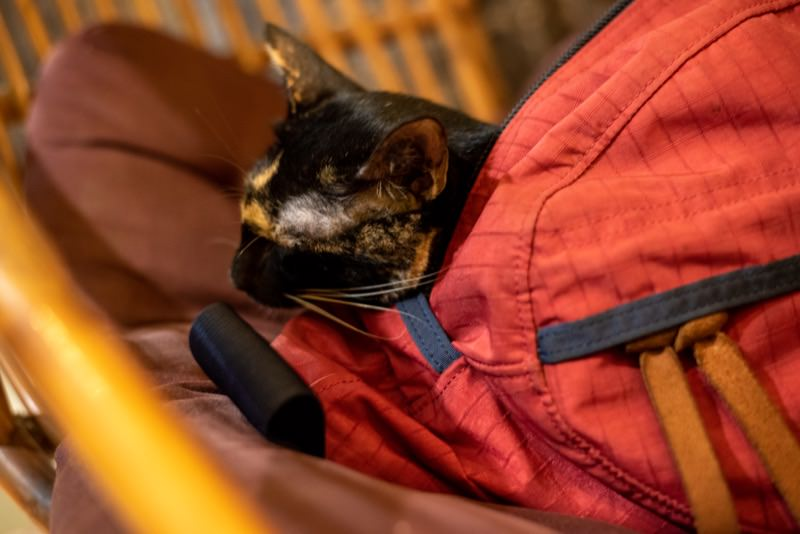 カバンの中で寝る猫