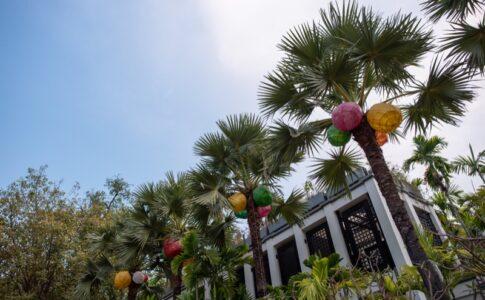 シンタマニの椰子の木